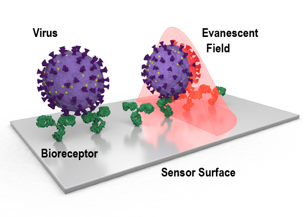 How nanophotonic label-free biosensors can contribute to rapid and massive diagnostics of respiratory virus infections: COVID19 case.